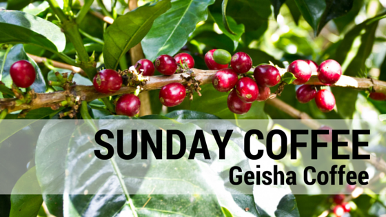 Geisha Coffee: Living Up To The Hype